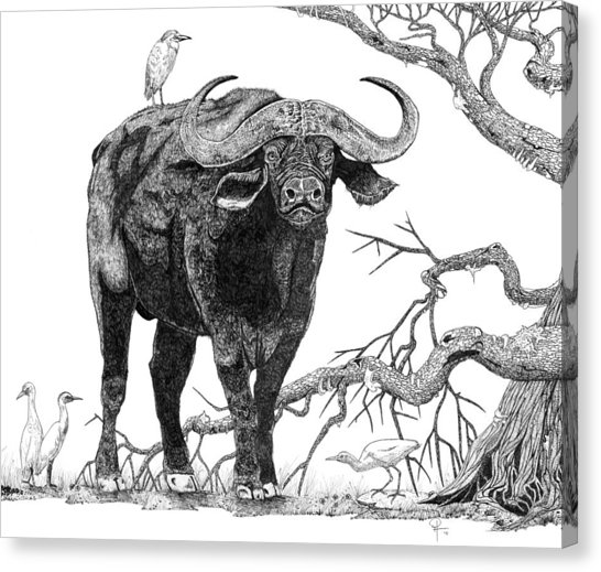 546x519 King Of The Cape Buffalo Drawing By Doug Hiser