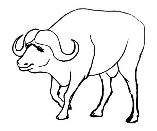 549x458 Pictures Buffalo Drawing Images,