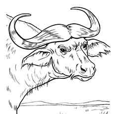 230x230 Top 10 Free Printable Buffalo Coloring Pages Online