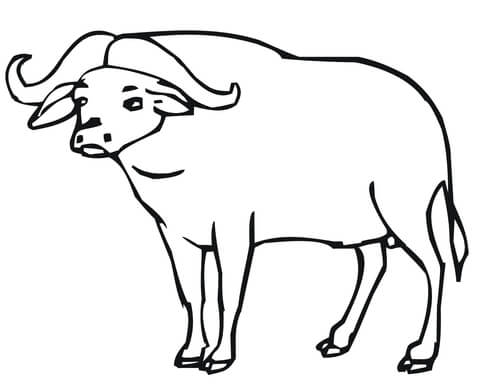 480x392 African Buffalo Coloring Page Free Printable Coloring Pages