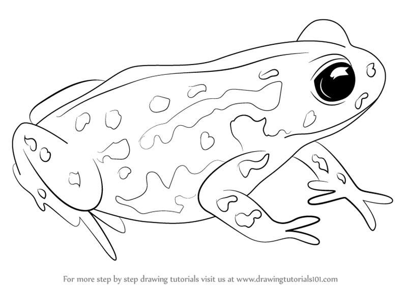 800x566 Learn How To Draw A Cape Mountain Toad (Amphibians) Step By Step