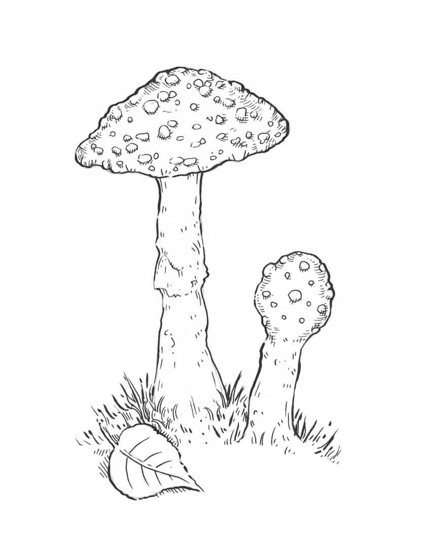 850x1097 How To Draw A Mushroom