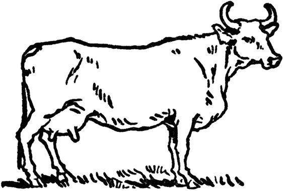564x381 Free Coloring Pages For Kids Coloring Cow