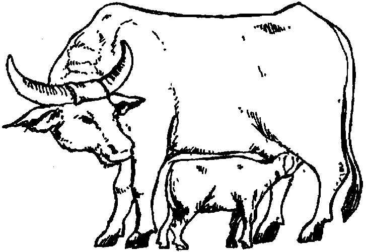 Famous External Anatomy Of Carabao Mold Anatomy And Physiology