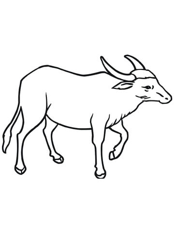 360x480 Wild Asian Water Buffalo Coloring Page Free Printable Coloring Pages
