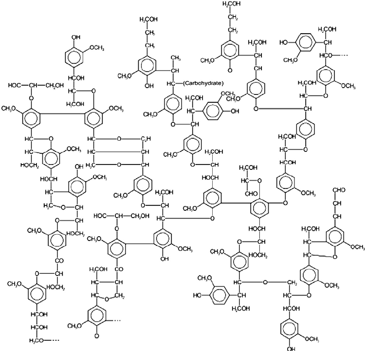 750x721 The Structure Of Lignin Carbohydrate Complex [16]. Carbohydrate