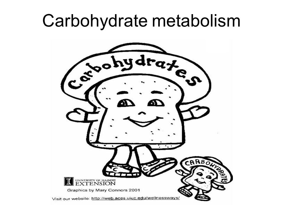 960x720 Carbohydrate Metabolism. Cho Supply Diet Endogenous Reserves