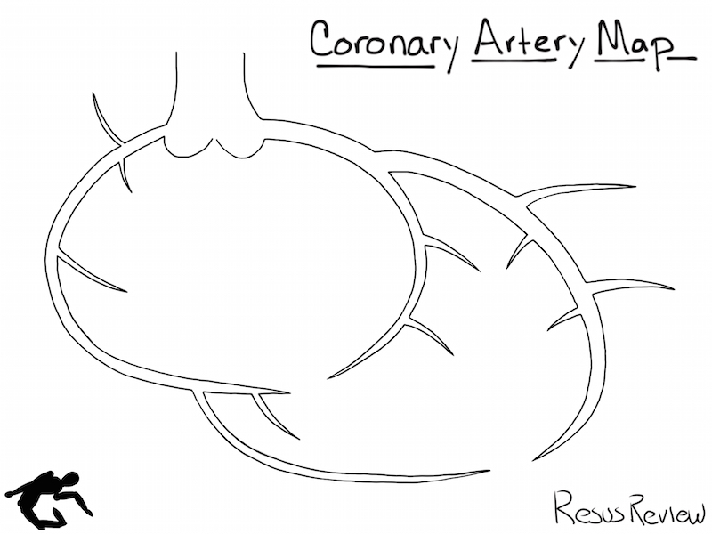 The Best Free Coronary Drawing Images Download From 22 Free