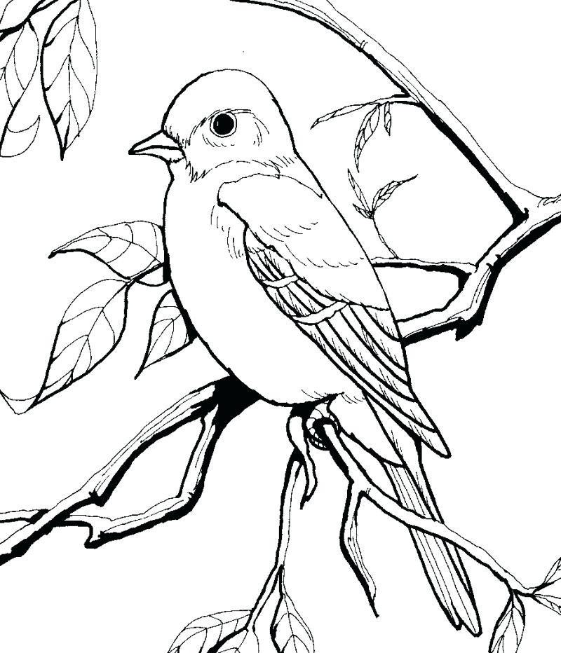 800x932 Bird Coloring Page Book Cardinal Printable