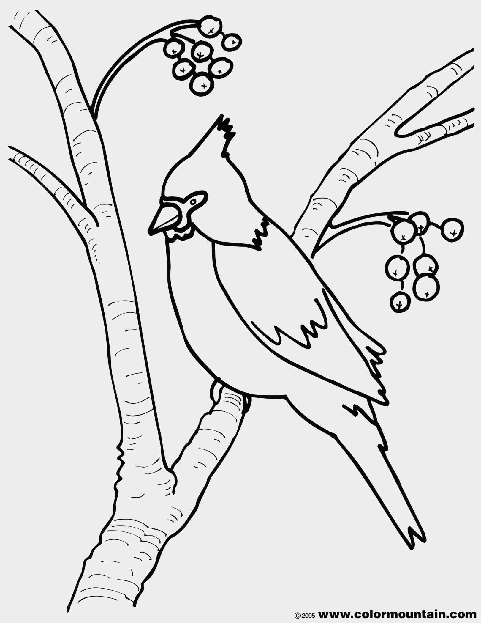 Free Coloring Pages Cardinal Bird