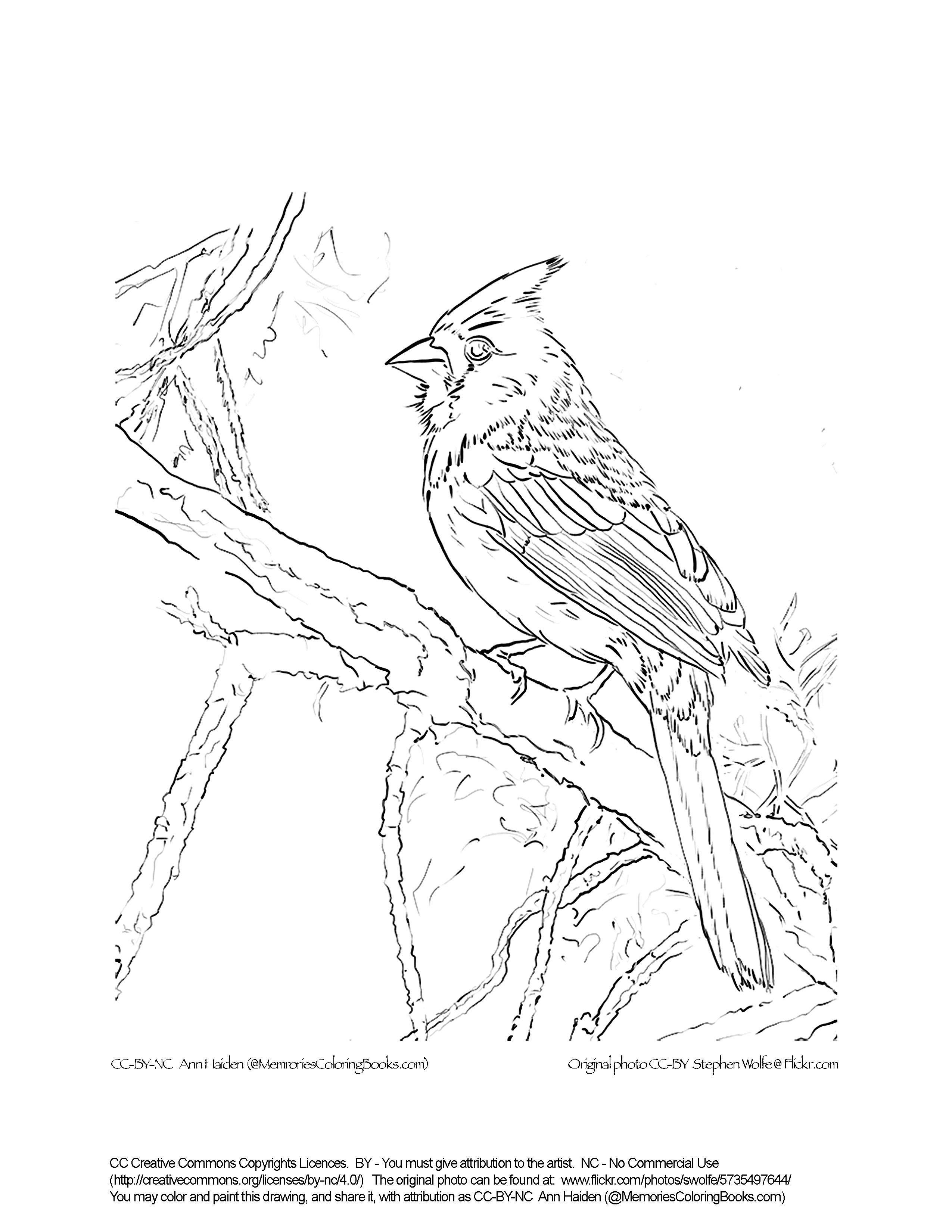 Cardinals Drawing at GetDrawings | Free download