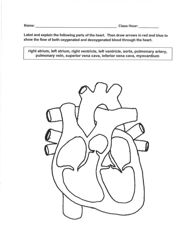 Cardiovascular System Supplementary Worksheet Answers Proga Info