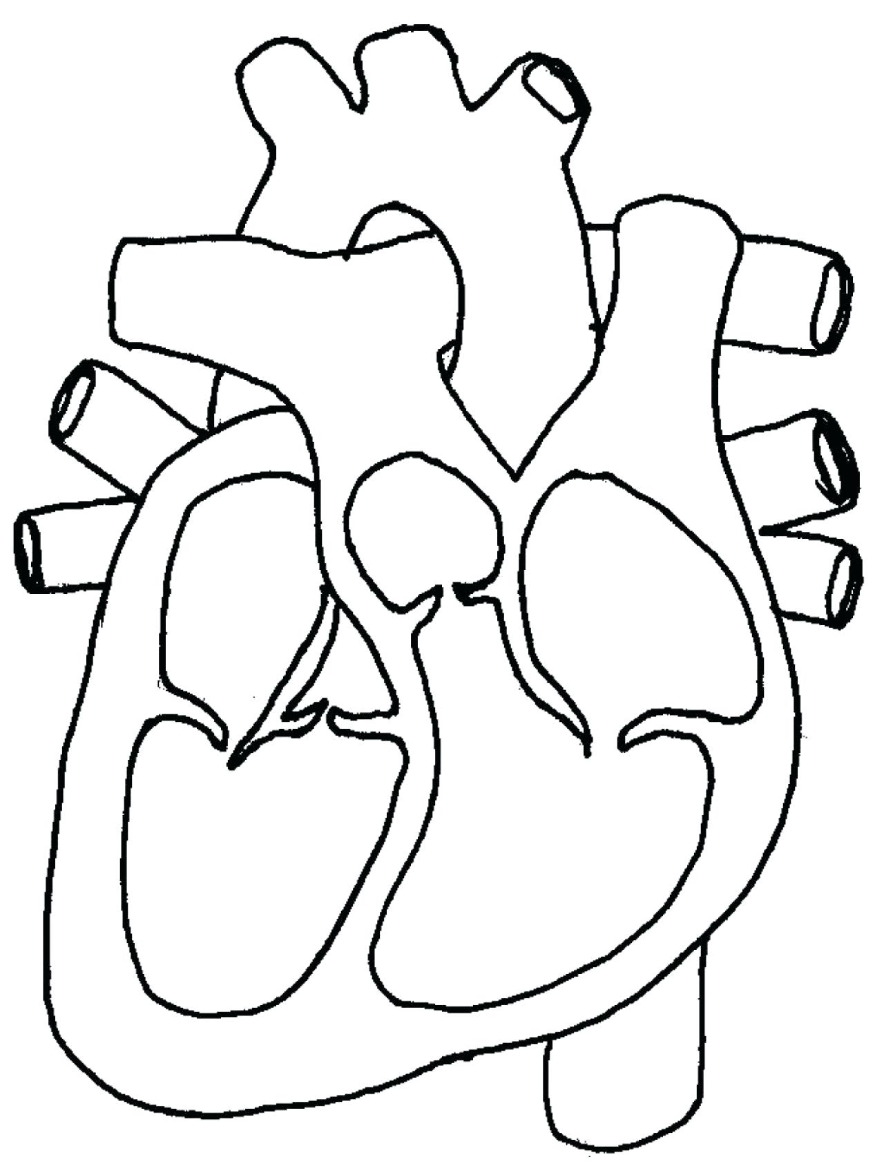 18 Best Images Of Heart Anatomy Blood Flow Worksheet Manual Guide