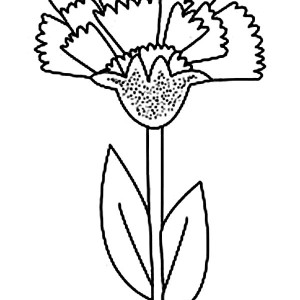 Carnation Drawing Step By Step at GetDrawingscom Free for