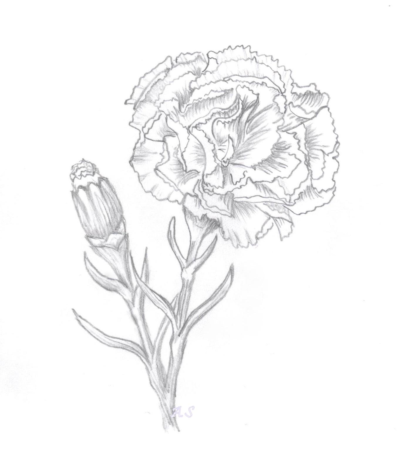 1359x1600 Alexandra's Art Amp Papercraft Carnation Digi Sketch