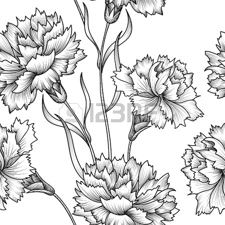 Carnation Flower Drawing