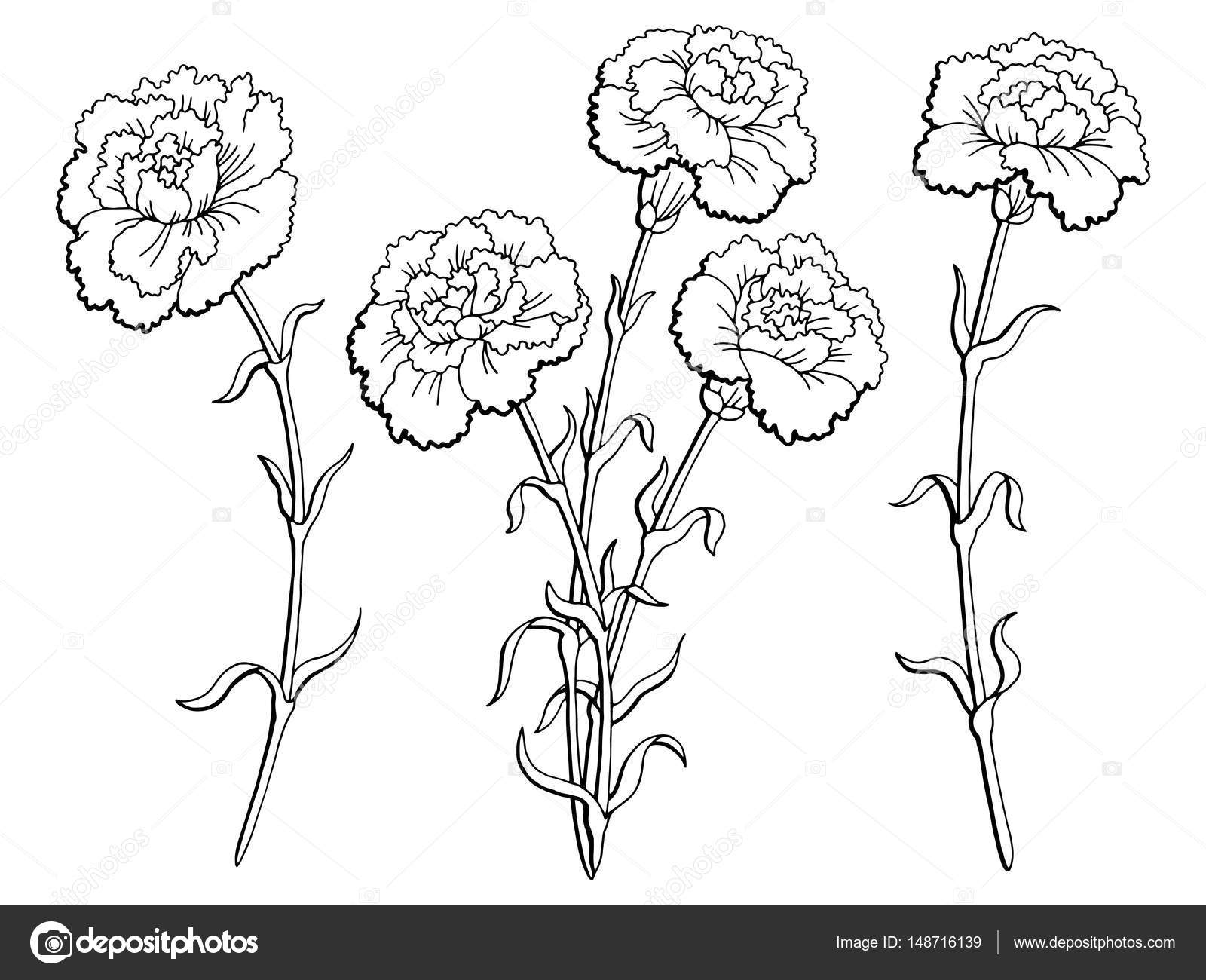 Carnation Flower Drawing At Getdrawings Free For Personal Use