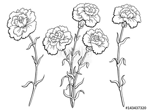 dianthus caryophyllus coloring pages - photo#28
