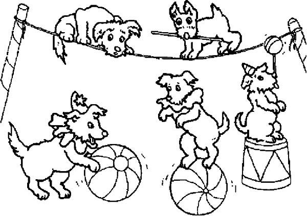 600x423 Dog Circus
