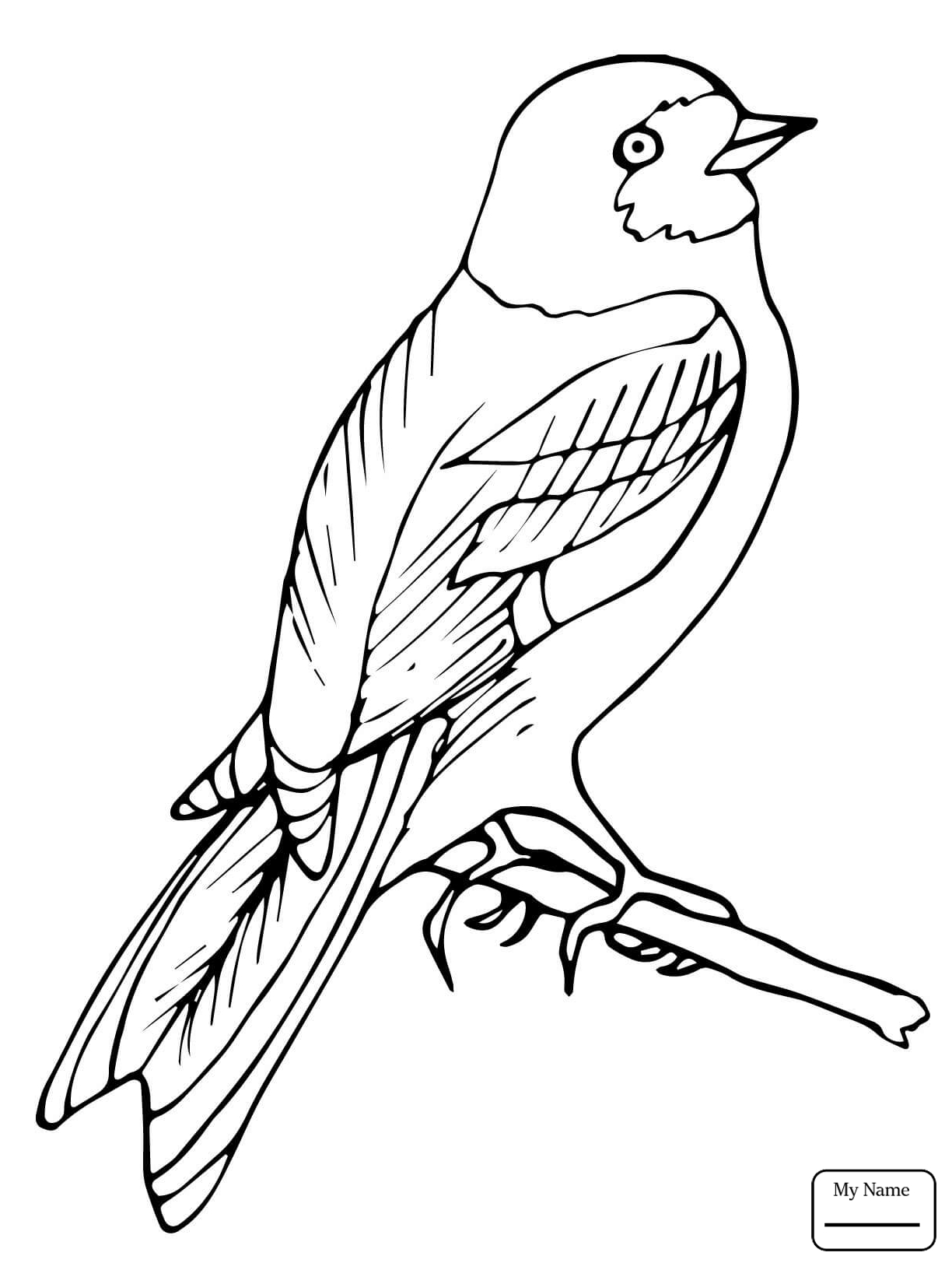 1224x1632 wren cute carolina wren birds coloring pages for kids azcoloring