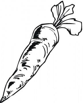 290x360 Carrot Drawing Vegetables Carrots