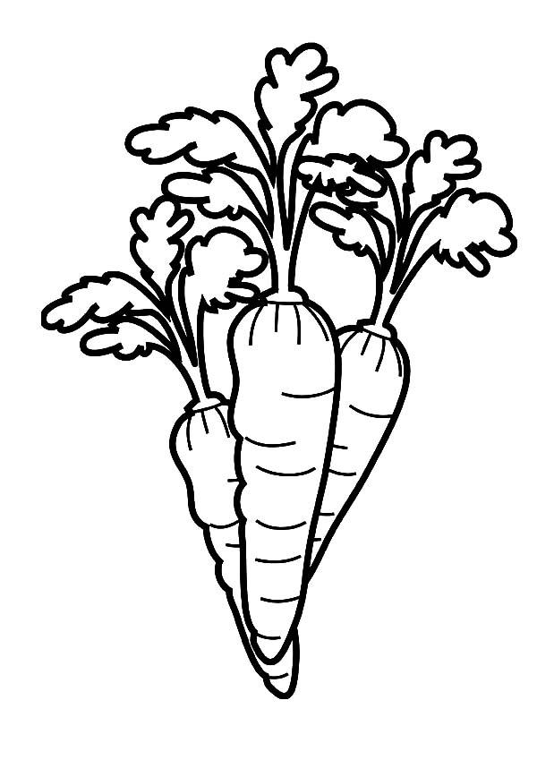 Carrot Line Drawing At GetDrawings