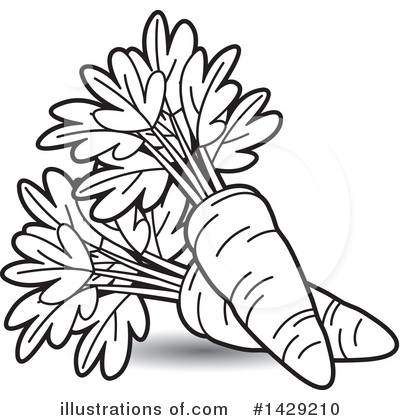 carrot line drawing at getdrawings com free for personal use rh getdrawings com