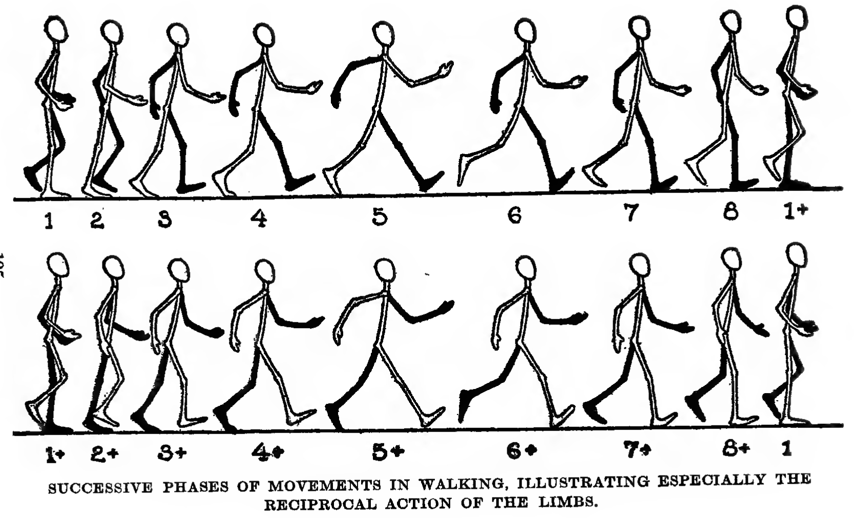 1677x1012 How To Draw And Animate A Person Walking Or Running