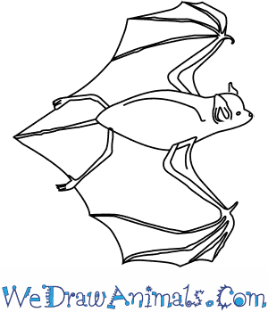 300x350 How To Draw A Big Brown Bat