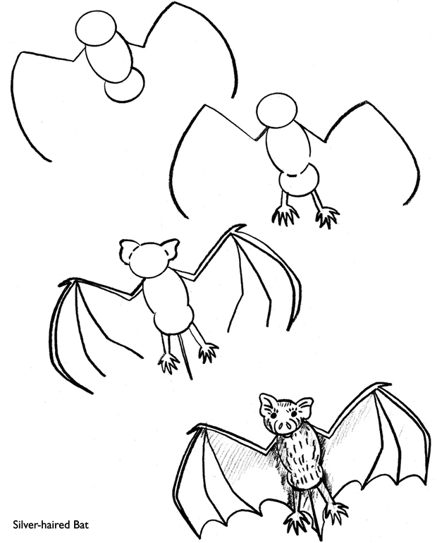 620x770 How To Draw A Silver Haired Bat