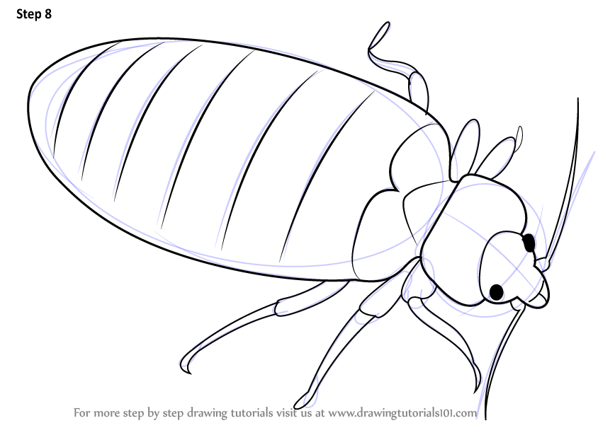 844x598 Learn How To Draw A Bed Bug (Insects) Step By Step Drawing Tutorials