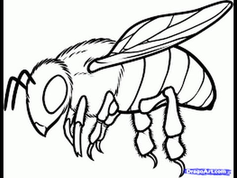 480x360 How To Draw A Bee