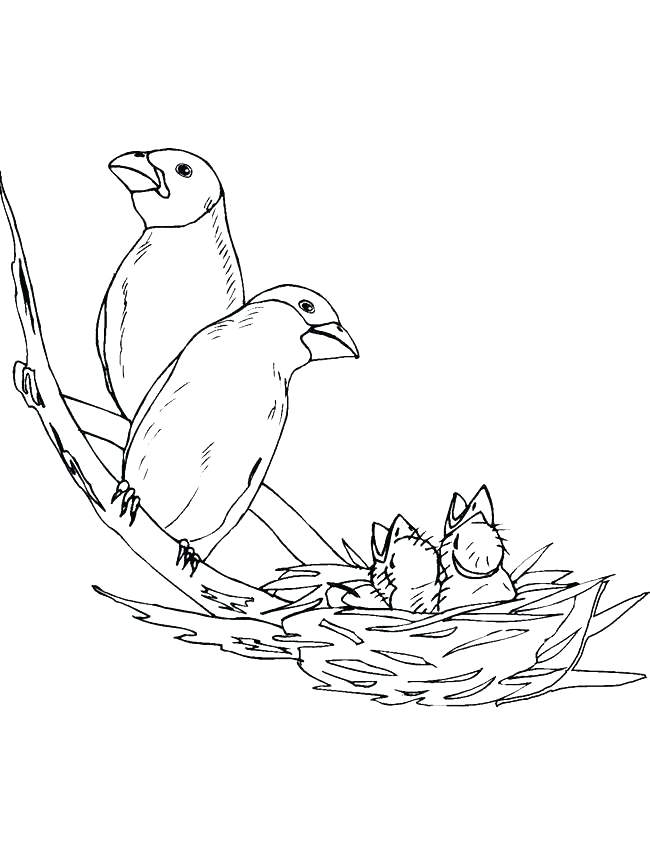 650x850 Bird Nest Coloring Page Cartoon Pages Birds Home