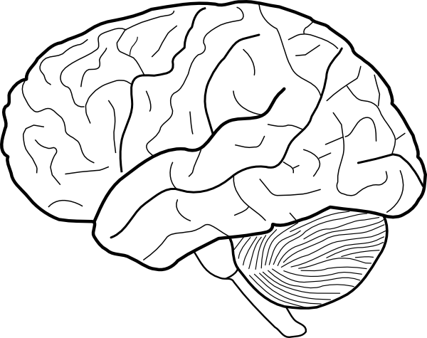 600x475 Brain Line Drawing Clip Art