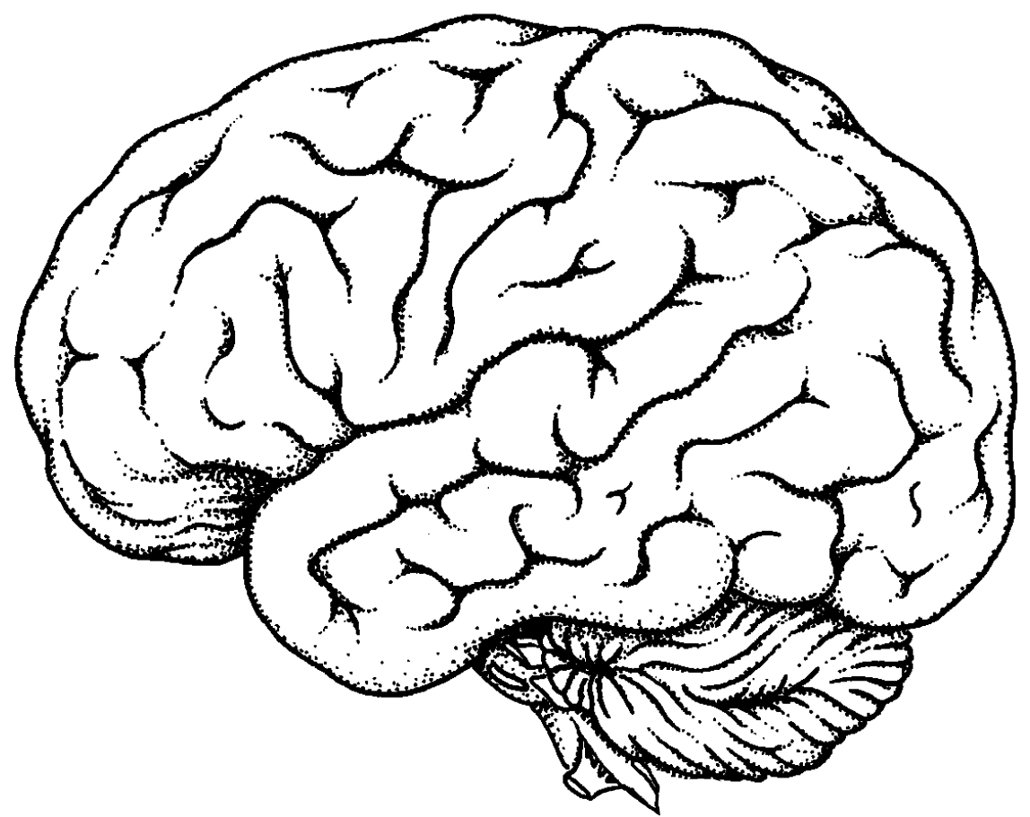 1148x911 Cartoon Brain Drawing Brain Clipart Drawing