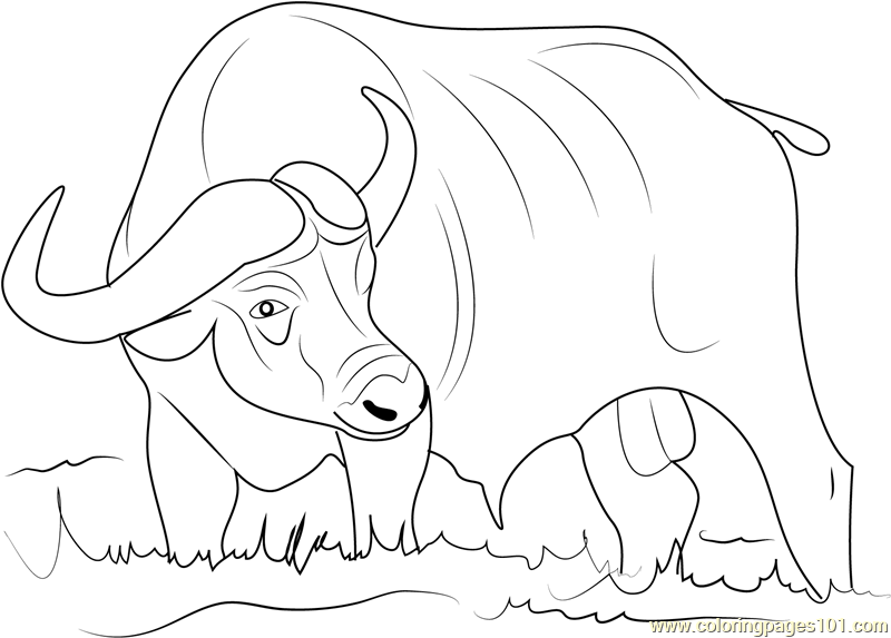 800x573 Asiatic Buffalo Coloring Page