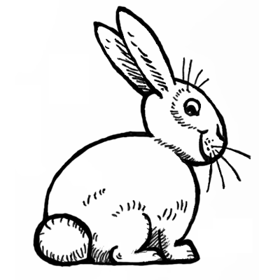 400x400 How To Draw Bunnies With Easy Bunny Rabbits Drawing Lesson