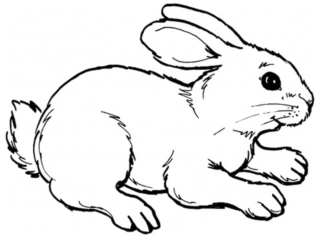 1024x768 Cartoon Rabbit Drawing 5. How To Draw A Cartoon Bunny