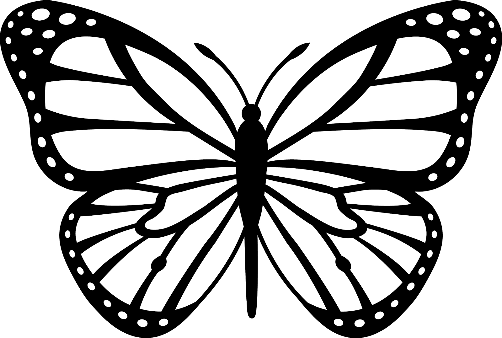 Cartoon Butterfly Drawing