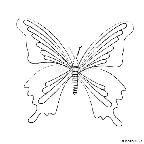 500x500 Sketch Draw Butterfly Cartoon Vector Graphic Design Stock Image