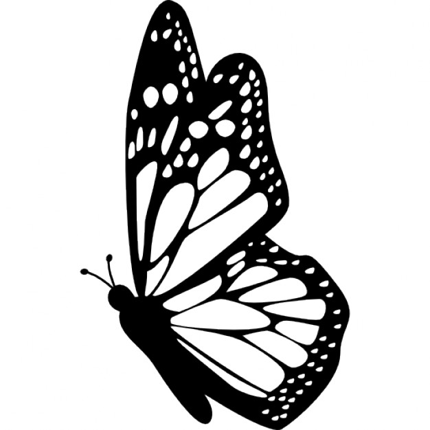 626x626 Butterfly Side View With Detailed Wings Icons Free Download