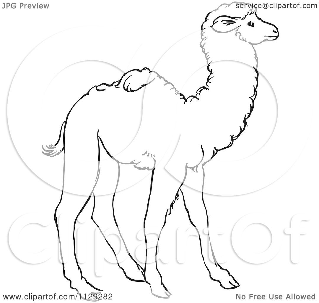 1080x1024 Cartoon Clipart Of An Outlined Cute Baby Camel