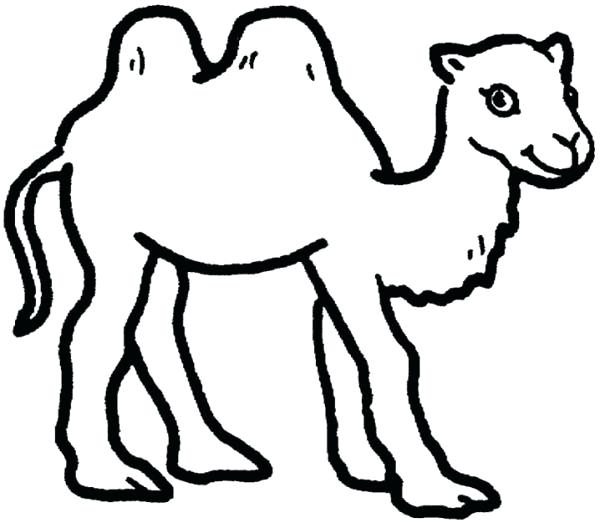 600x523 Camel And Baby 1 Coloring Page Download Free Head Murs
