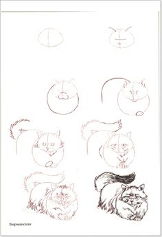 236x345 How To Draw A Sleeping Cat Step By Step
