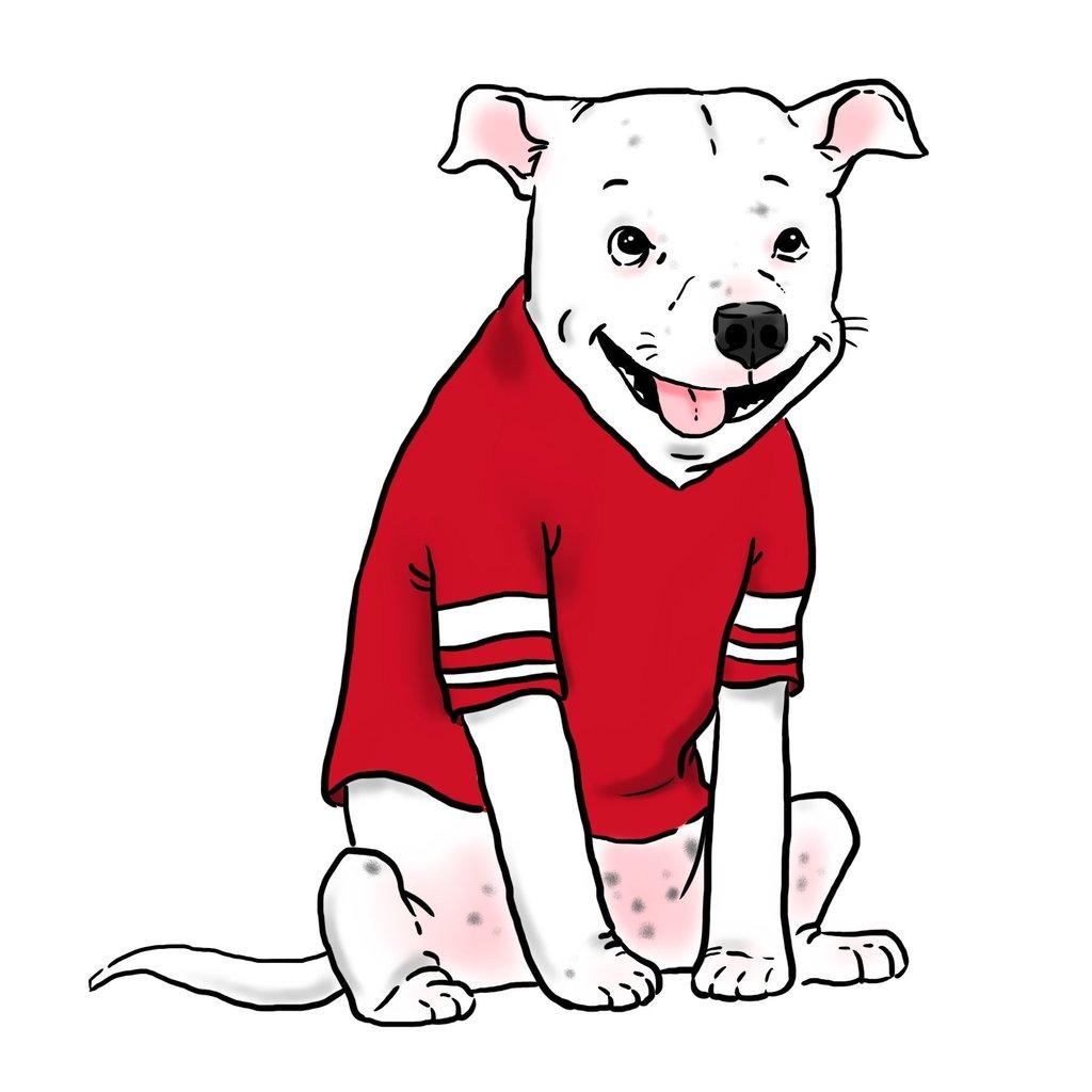 1024x1024 Cartoon Pet Portrait, Funny Dog Portrait, Funny Cat Portrait