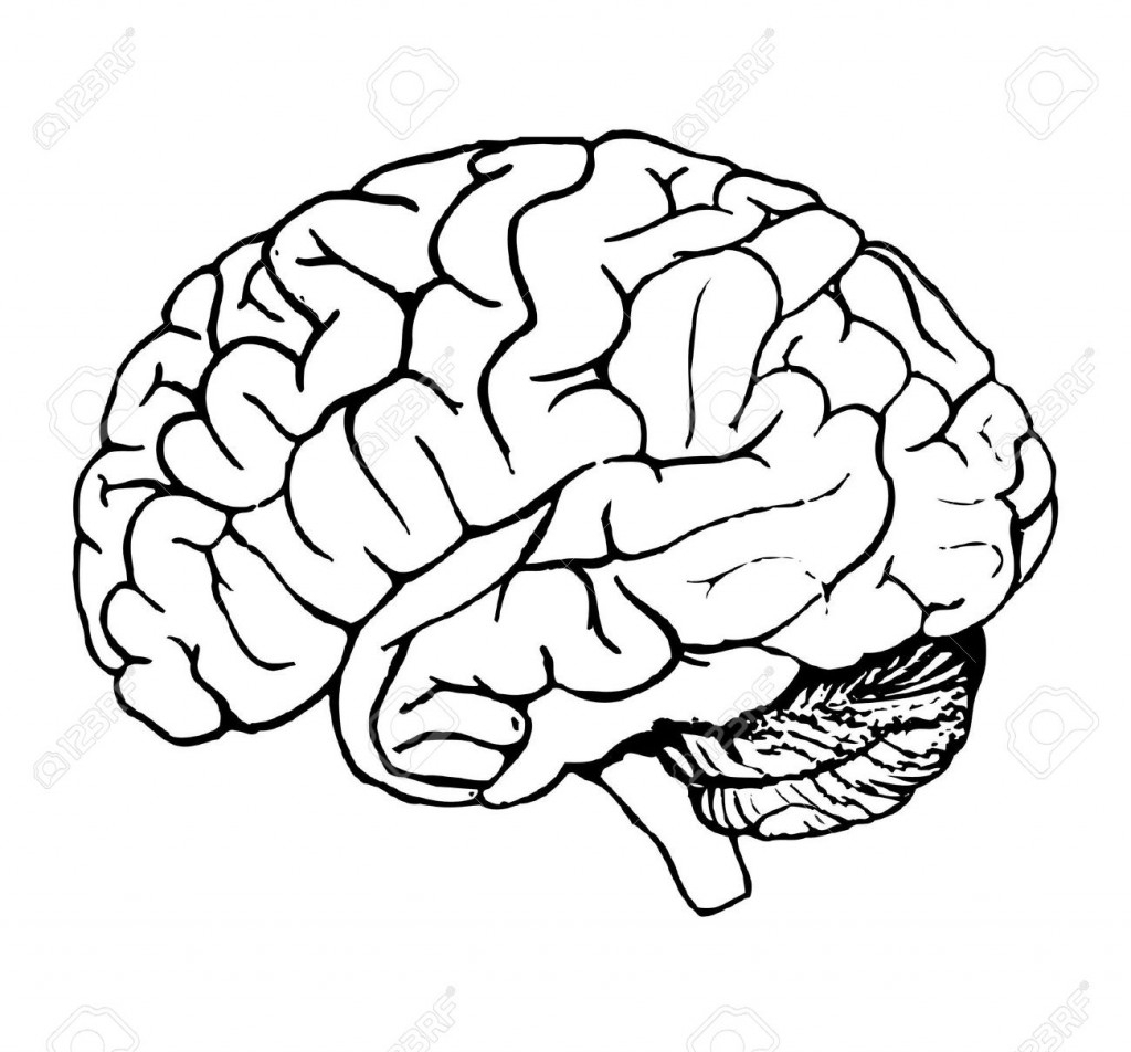 1024x952 Cartoon Brain Drawing Cartoon Brain Drawing Outlined Healthy Brain