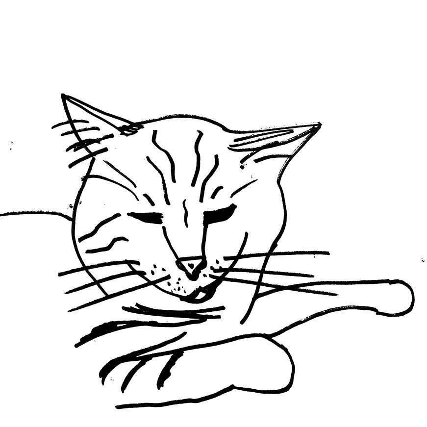 Cartoon Drawing Of Cat