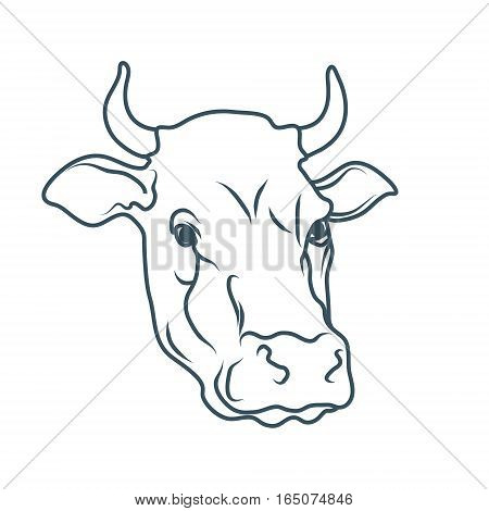 450x470 Cow,cartoon Cow,cow Drawing,cow Vector Amp Photo Bigstock