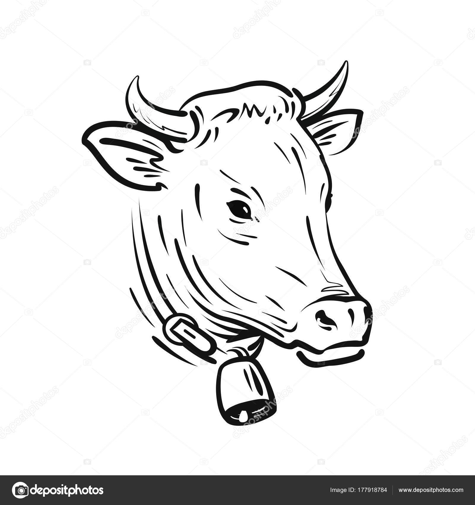 1600x1700 Cow With Bell, Sketch. Farm Animal, Vector Illustration Stock