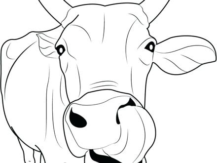440x330 Best Of Cow Coloring Page Images Coloring Page Coloring Pages
